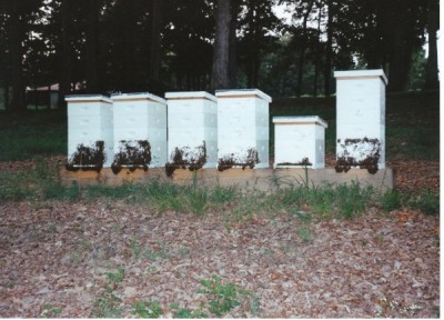 Bee Hives with Bearding Bees